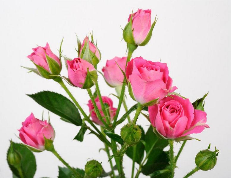 297073986_w640_h640_lovely_lidia_7