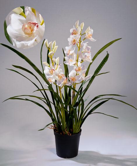 OrhidejaCimbidiumbelajakustvkashpo2vetki10.0610058