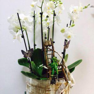 Подарочные наборы из комнатных растений