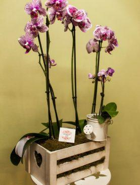 Композиция из комнатных растений Домашний уют