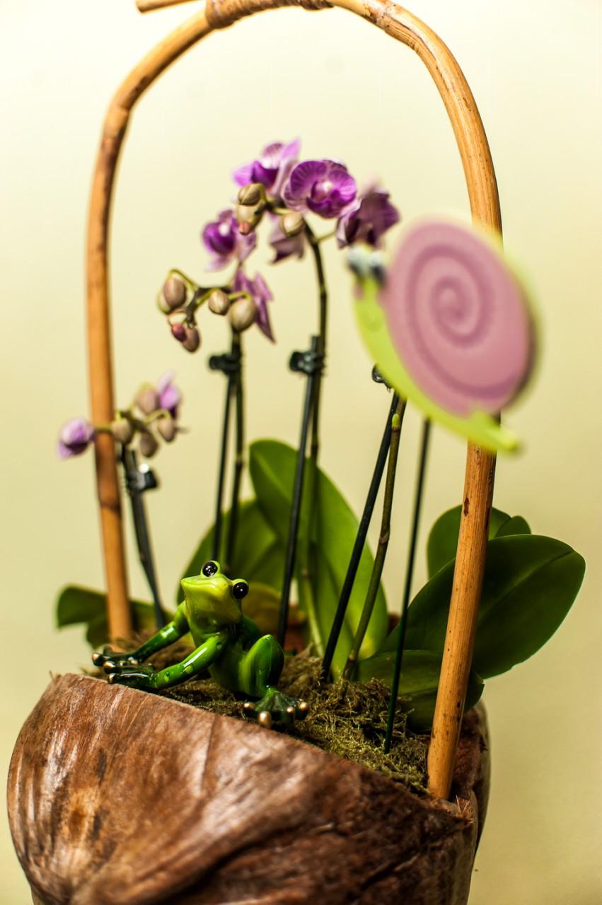 Композиция из комнатных растений Идиллия