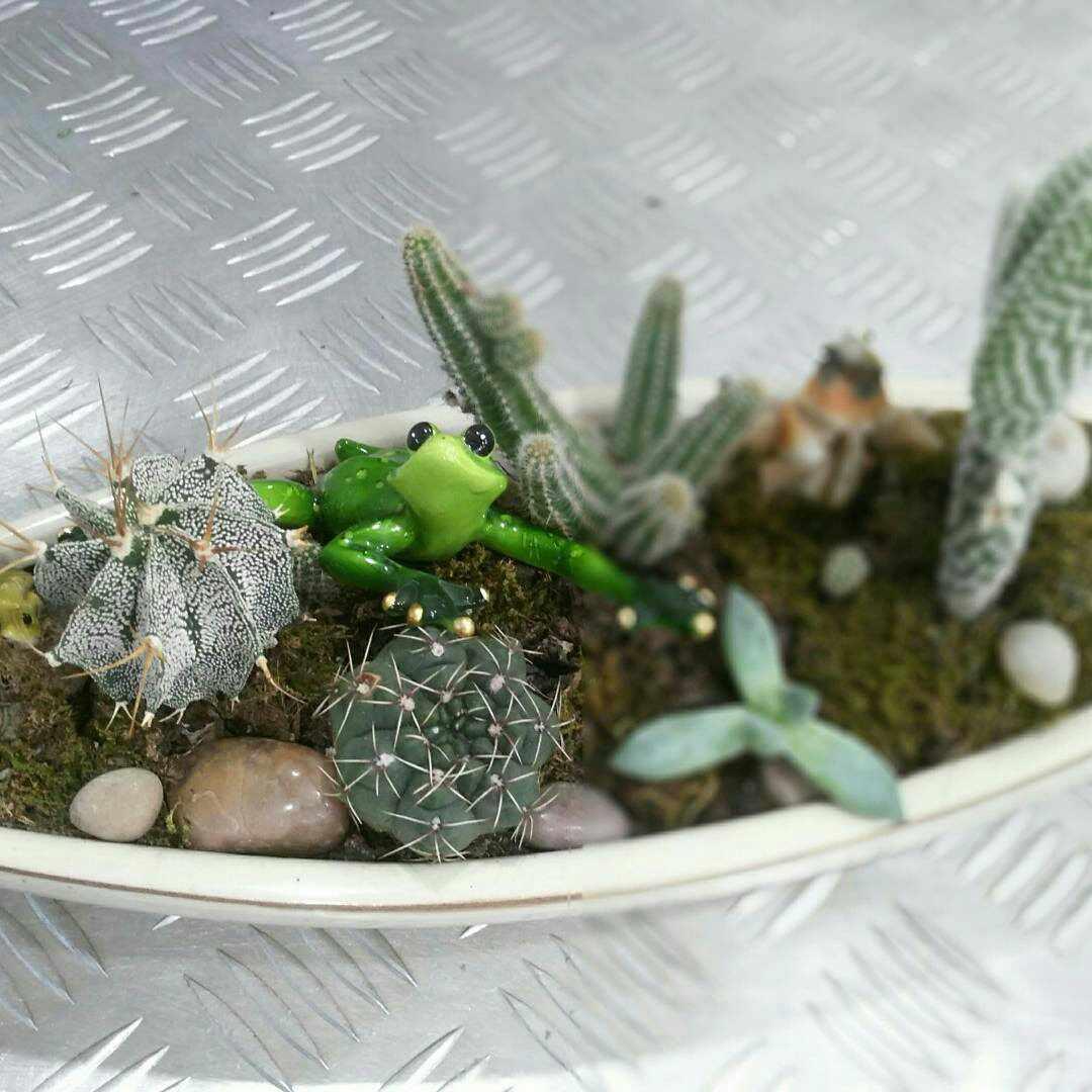 nabor_iz_kaktusov